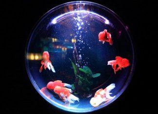 Image: Unsplash   Goldfish Bowl