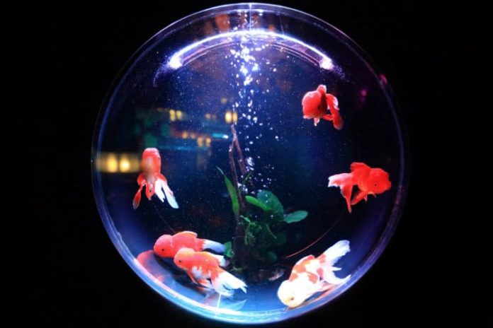 Image: Unsplash | Goldfish Bowl