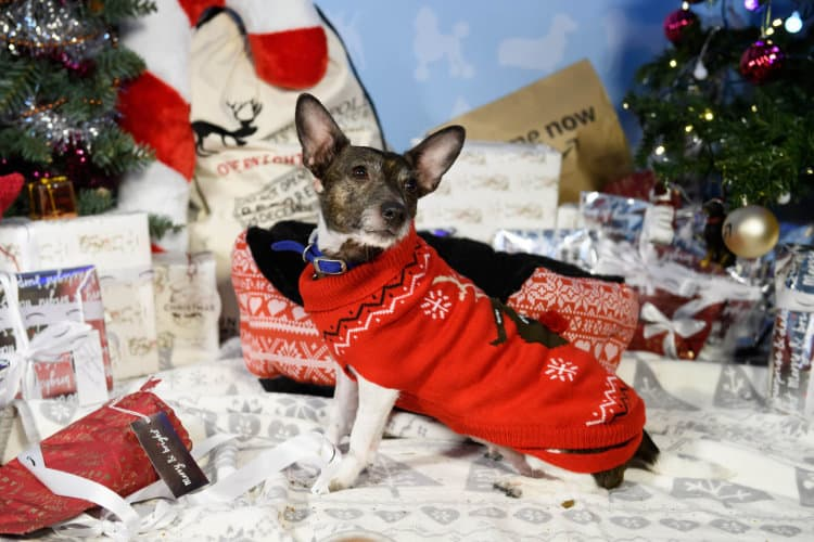 UK Dogs Will Enjoy a Festive Christmas Season This Year