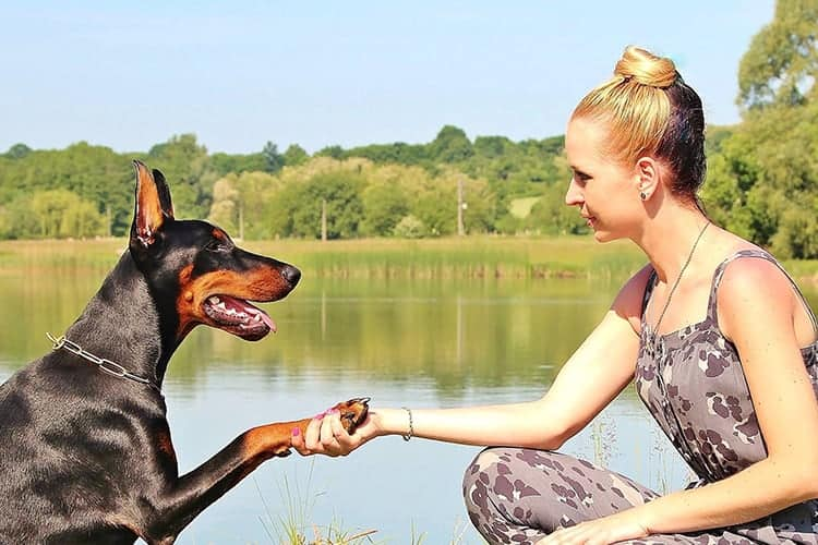 Study Finds That Humans Lean on Their Dogs to Relieve Stress
