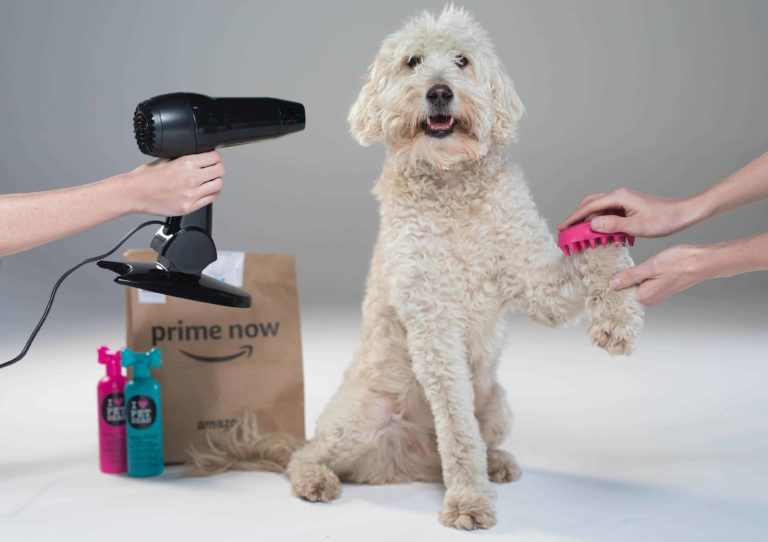 Brighton The Most 'Show Ready' City For Crufts According To Amazon UK