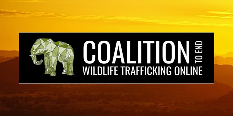 Online Platforms Removed Over 3 Million Listings for Trafficked Wildlife