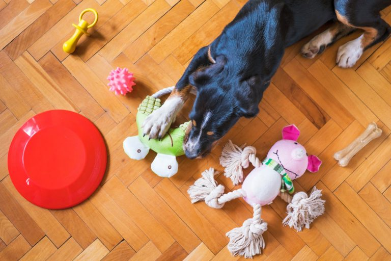 Poshmark Adds Pets Category to Marketplace – First Major Expansion Since IPO
